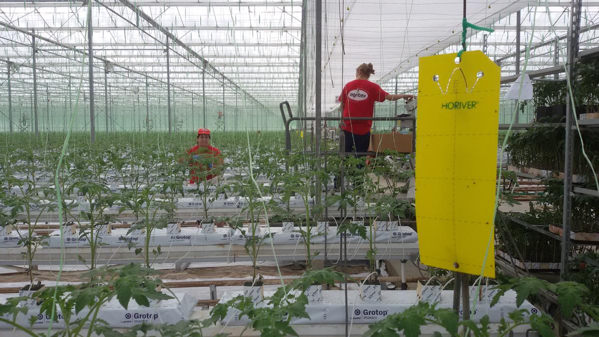 Υδροπονία Lucia's Farm - Πως καλλιεργούνται